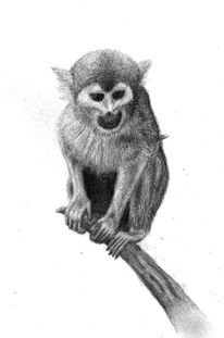 Tiere, Zeichnungen, Affe