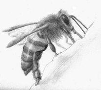 Insekten, Biene, Zeichnungen, Tiere