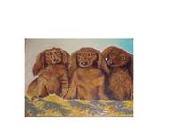 Tiere, Tierportrait, Hund, Dackel