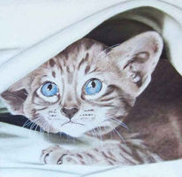 Katze, Tiermalerei, Realismus, Tierportrait