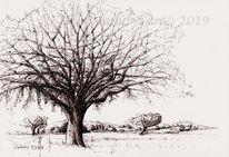 Natur, Federzeichnung, Tusche, Landschaft