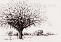 Baum, Monochrom, Umbra, Studie