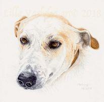 Tierportrait, Hund, Tuschezeichnung, Tiere