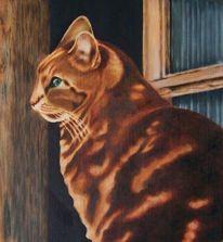 Glas, Katzenportrait, Wand, Sitzen