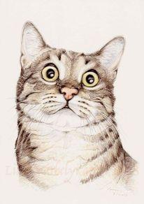 Katze, Tiere, Tuschezeichnung, Tusche