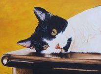 Tiermalerei, Lasurtechnik ölmalerei, Katze, Realismus