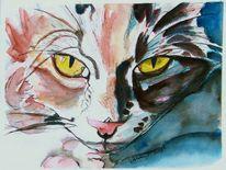 Tierportrait, Teirportrait, Katze, Augen