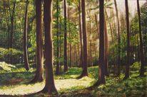 Licht, Baum, Grün, Sommer