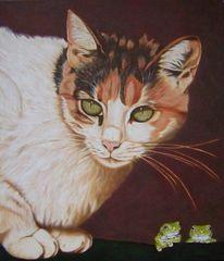 Katzenportrait, Bunt, Glanz, Katze