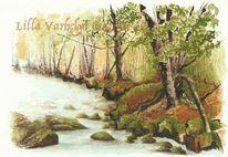Ufer, Natur, Wald, Bach