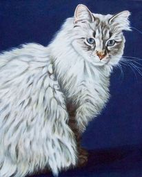 Katze, Tiermalerei, Katzenportrait, Ölmalerei