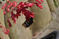 Biene, Blumen, Insekten, Digitale kunst