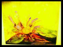 Blumen, Liebe, Natur, Malerei