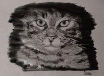 Gimp, Katze, Bearbeitung, Zeichnungen