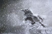Zeichnung, Kohlezeichnung, Tierzeichnung, Vogel