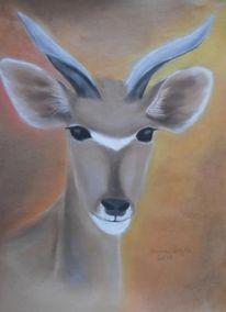 Wildtier, Orange, Afrika, Kudu