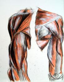 Zeichnungen, Anatomie