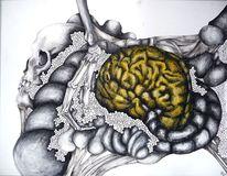 Geflecht, Skelett, Gehirn, Knochen geflecht