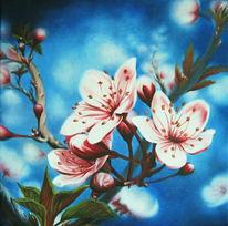 Blumen, Blüte, Zeichnungen, Stillleben