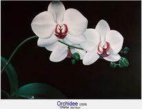 Blumen orchidee, Malerei, Pflanzen, Orchidee