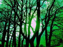 Grün, Äste, Natur, Sonne