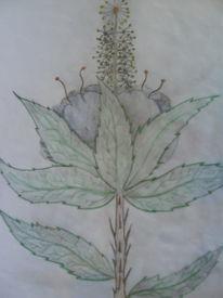 Zeichnungen, Pflanzen