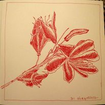 Blüte, Rot, Zeichnung, Azaleen