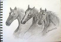 Pferde, Divoart, Kohlezeichnung, Zeichnung