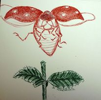 Natur, Di vora anneliese, Zeichnung, Marienkäfer