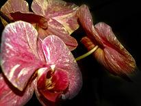 Farben, Makro, Orchidee, Fotografie