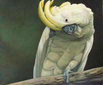 Kakadu, Vogel, Gelb, Natur