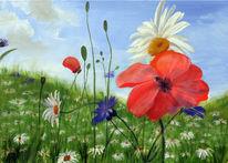Wiese, Margarite, Mohn, Blumen