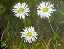 Gänseblümchen, Natur, Wiese, Gras