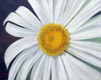 Grün, Weiß, Blumen, Margarite
