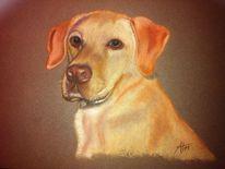 Kreide, Pastellmalerei, Labrador, Hund