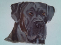 Pastellmalerei, Tierportrait, Hund, Hundekopf