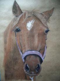 Pferde, Pferdekopf, Tierportrait, Pastellmalerei