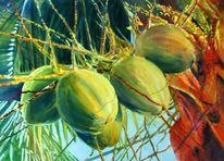 Baum, Exotisch, Kokos, Obst