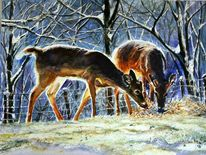 Winter, Wildtiere, Hirshe, Natur