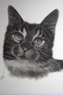 Gesicht, Raubtier, Portrait, Katze