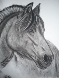 Tiere, Kohlezeichnung, Pferde, Portrait