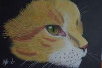 Katze, Pastellmalerei, Portrait, Tiere