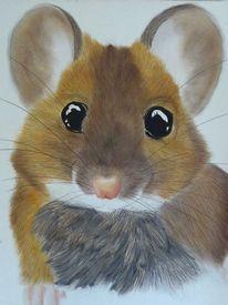Tiere, Natur, Maus, Augen
