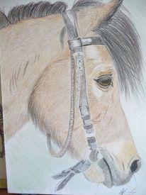 Pony, Tiere, Reiten, Pferde