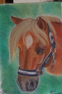 Pastellmalerei, Tiere, Pony, Fuchs