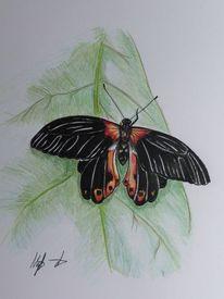 Blumen, Insekten, Schmetterling, Schwarz