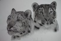 Tiere, Schneeleoparden, Katze, Kohlezeichnung
