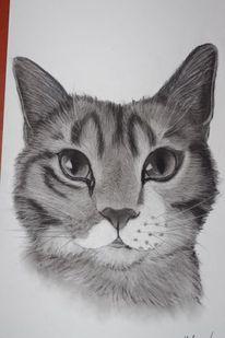 Katze, Gesicht, Raubtier, Augen