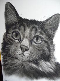 Raubtier, Portrait, Katze, Kater