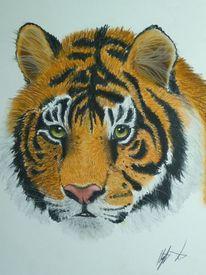 Tiger, Katze, Streifen, Gesicht